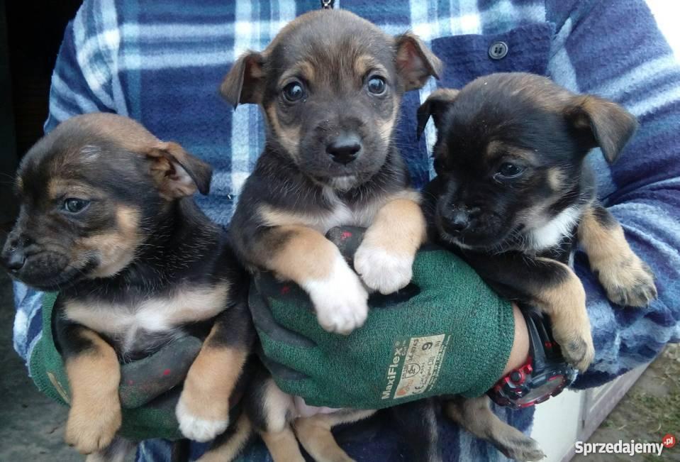 psy oddam sprzedam