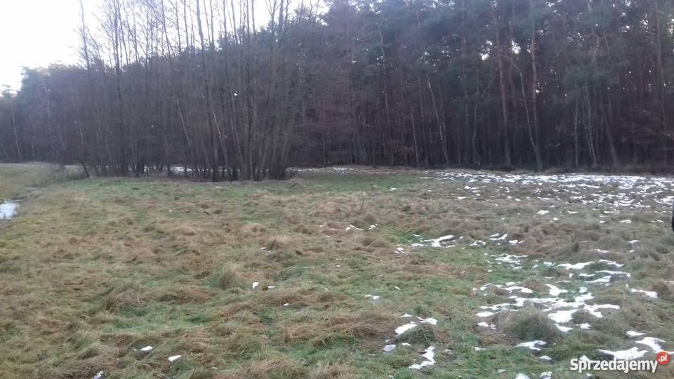 ladna dzialka polana łąka