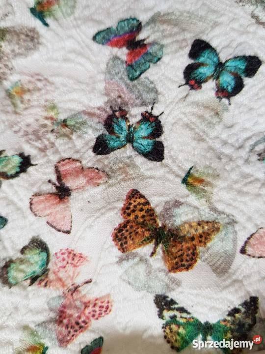sukienka na impreze z motylkami zara