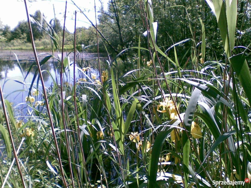 Działka rolna z własnym stawem Kozjaty