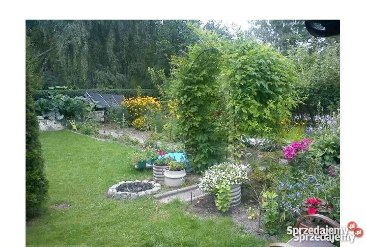 Działka ogrodowa 300m2 Lubin