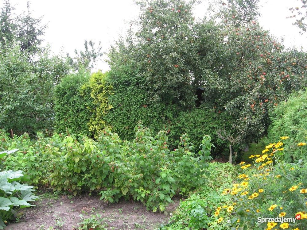 DZIAŁKĘ ogrodową z drewnianą altanką polna wielkopolskie Chodzież