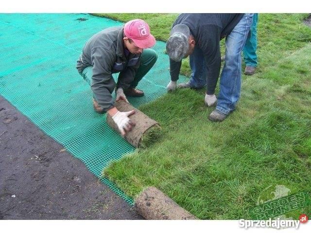 Trawa z rolki darń trawnik Bielsko-Biała