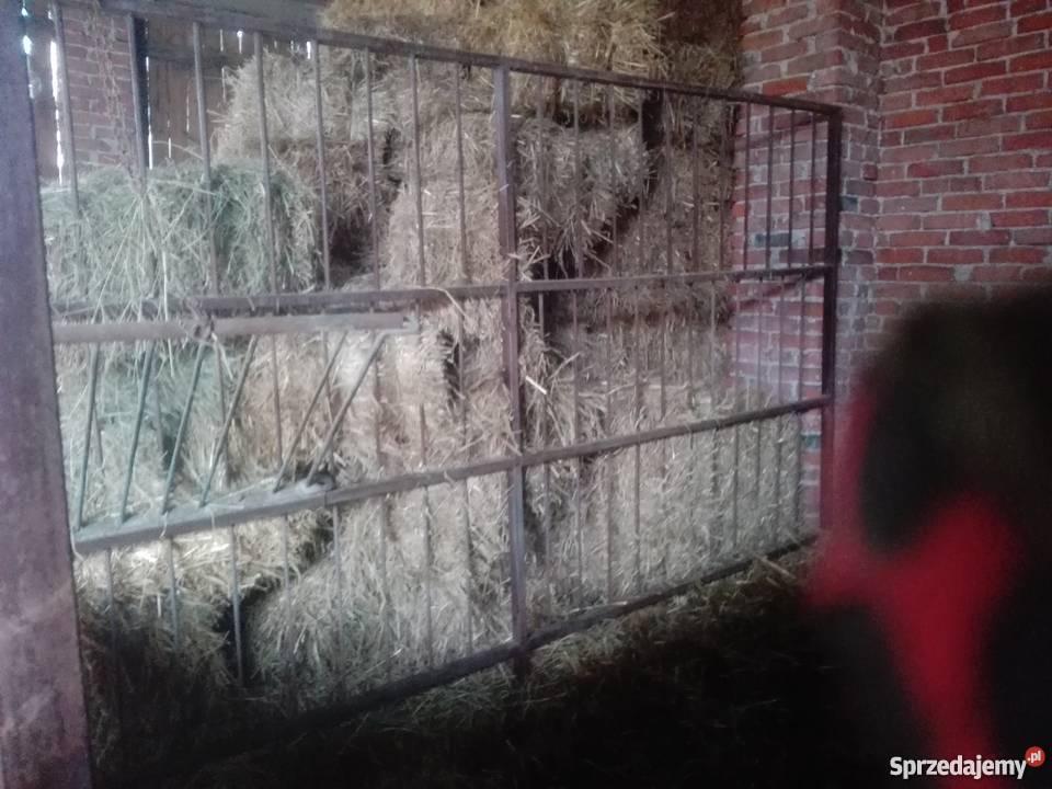 Boksy koni ogrodzenie Domaniewice
