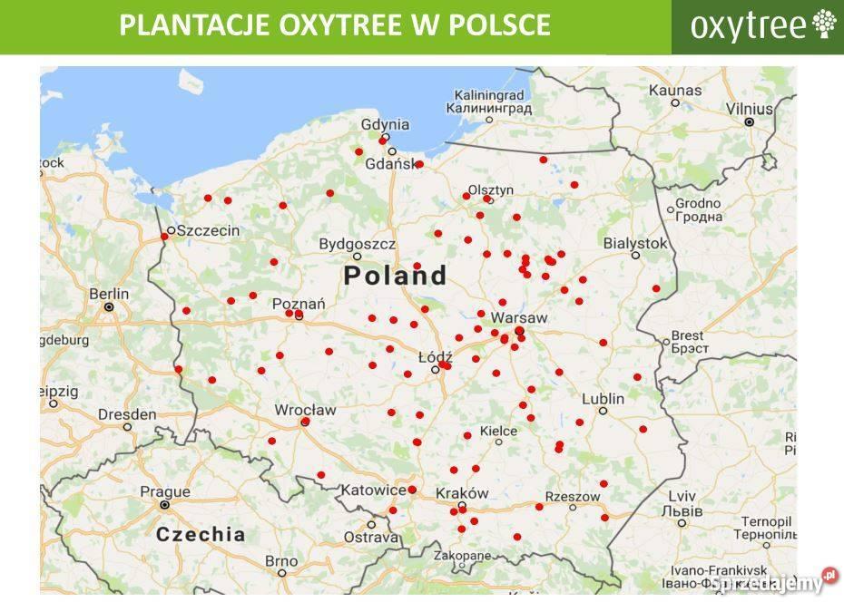 OXYTREE DRZEWA TLENOWE DO OGRODU I NA PLANTACJĘ Warszawa