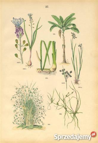 1885 r ZIELNIK III reprodukcje XIX w grafik do Wrocław