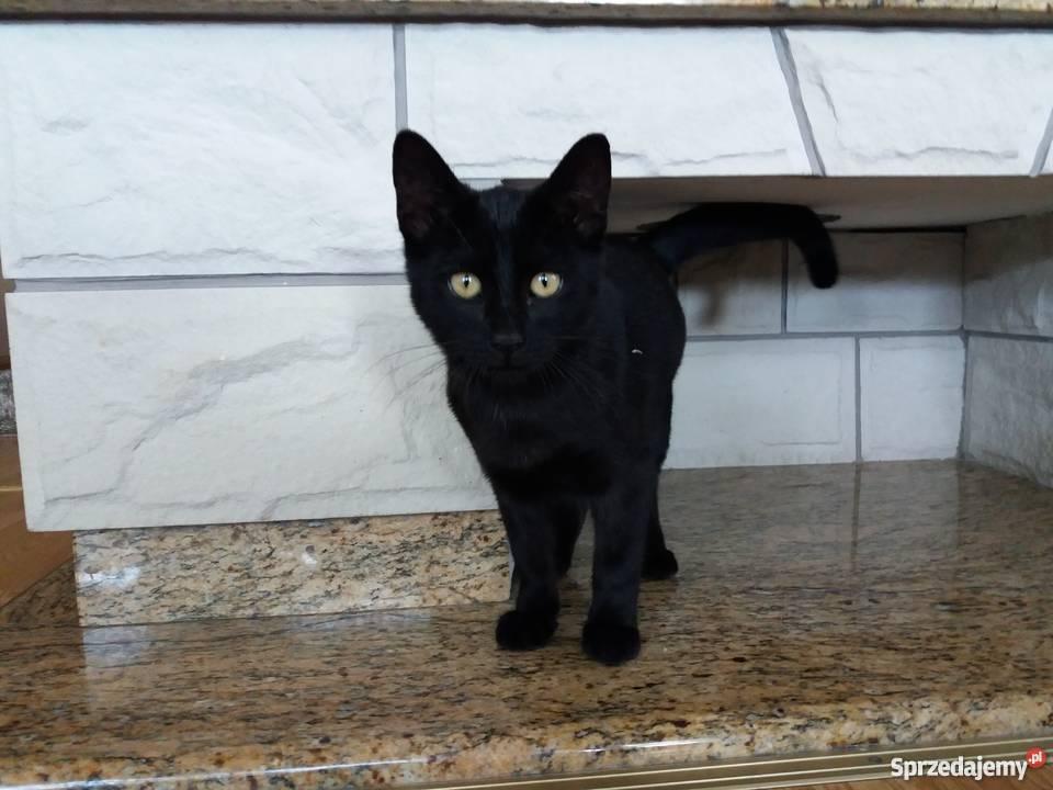 Topnotch Oddam w dobre ręce wesołego, czarnego kota!!! Radomsko XC88
