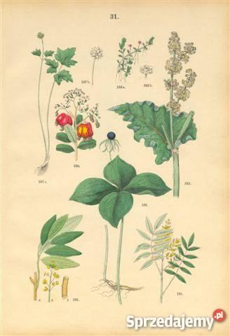 1885 r ZIELNIK III reprodukcje XIX w grafik do dolnośląskie