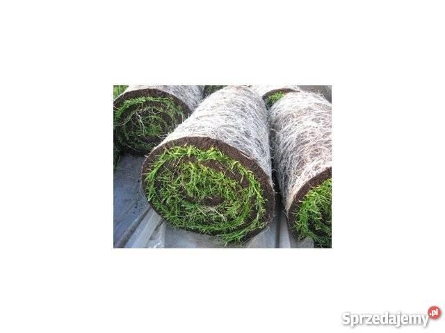 Trawa z rolki darń trawnik Bielsko-Biała sprzedam