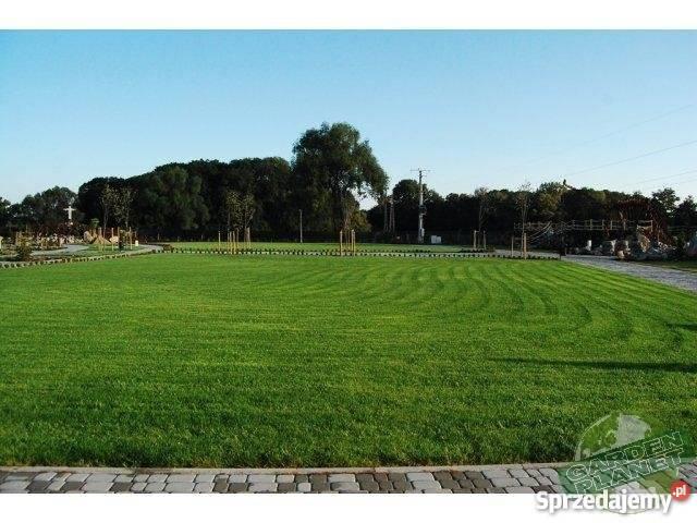 Trawa z rolki darń trawnik śląskie