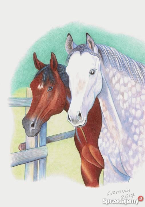 Obraz Koń Rysunek Kredką 3 Różne Konie Konin Sprzedajemypl