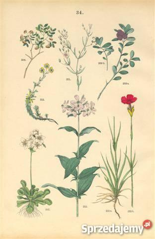 1885 r ZIELNIK III reprodukcje XIX w grafik do