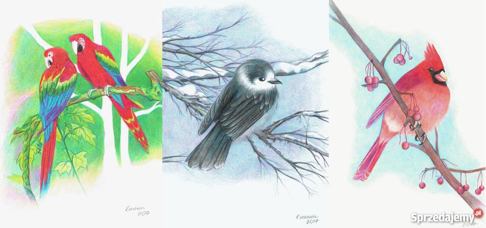 Ptak Rysunek Sprzedajemypl