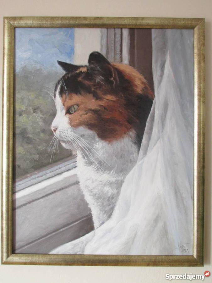 Obraz Olejny Kot W Oknie Krosno Sprzedajemypl