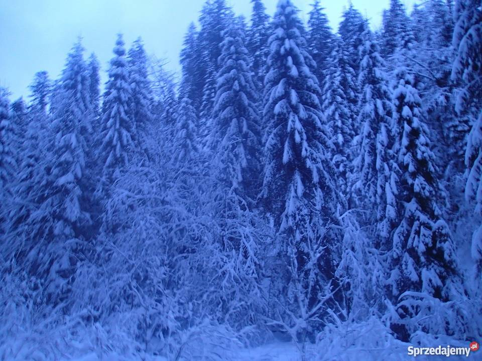 Kuligi Zimowe z Biesiadą w Kolybie Wisła 2018