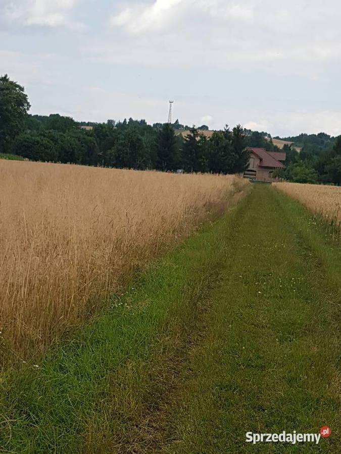 Sprzedam grunt rolny Biskupice Melsztyńskie