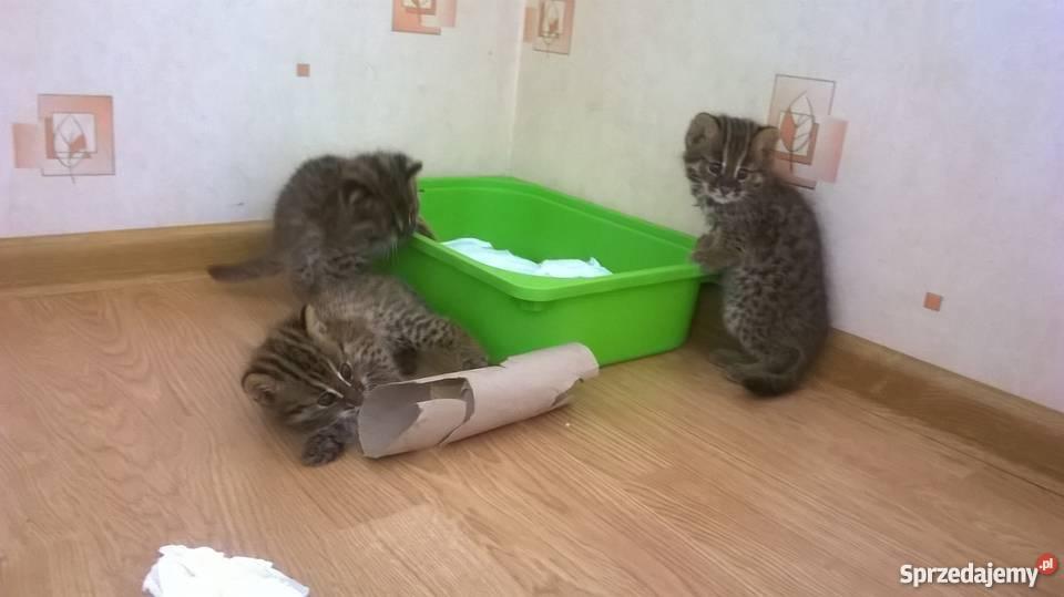 CAT:WPL