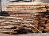foszty drewno modrzew świerk brzoza olcha dąb - 1
