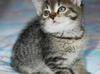 Mieszko i Pako - małe kotki