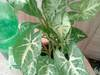Sprzedam rośliny doniczkowe