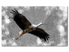 obraz xxl BOCIAN 5 - 120x70cm na płótnie ptak