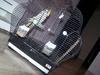 Sprzedam 2 papugi NIMFY, samiec i samiczka z klatką i wyposażeniem. Okolice Mińska Mazowieckiego - miniaturka
