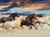 Tapeta, fototapeta Konie 3 wzory
