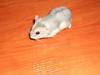 chomik dżungarski - miniaturka