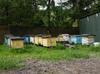 Sprzedam ULE typu DADANT wraz z pszczołami okolice Warszawy - miniaturka