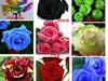 Nasiona róż 9 kolorów.dostawa bezpłatnie - miniaturka