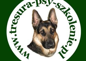 Profesjonalne szkolenie psów.