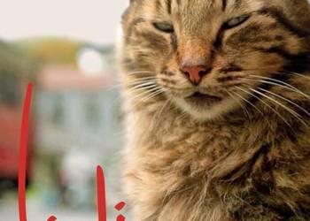 KEDI Sekretne życie kotów.Nowy [DVD]