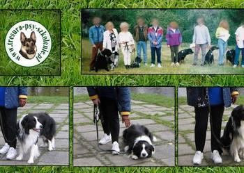 Profesjonalne szkolenie psów