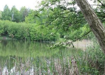 Piękne jezioro w otoczeniu lasu wraz z działką