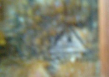 Obrazek z bursztynem