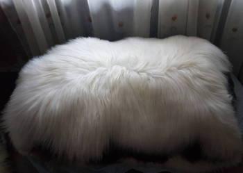 Skóry owcze skora owcza islandy białe