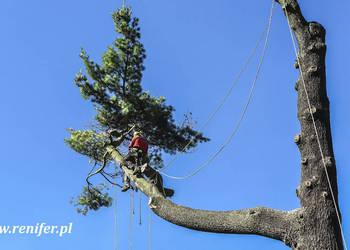 Alpinistyczna wycinka drzew, przycinka i wycinanie, rębak