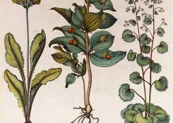 1713 r.  ZIELNIK  II - KWIATY  reprodukcje  XVIII w.  grafik