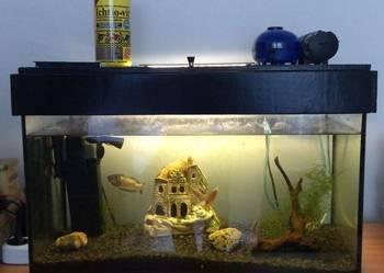 Pilnie Akwarium+caly osprzęt+rybki