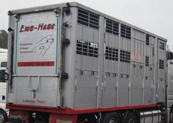 KABA do żywca zabudowa do świń 3 poziomy