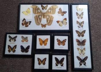 Motyle w ramce