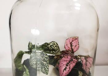 Las w słoiku – chwila zieleni prezent, ślub, urodziny