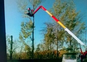 Usługi - podnośnik koszowy oraz dźwigi (wycinka drzew)