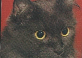 K.Poczt. Kot długowłosy niemiecki czarny ** 1979