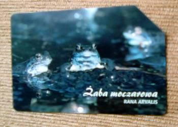 ŻABA MOCZAROWA ( RANA ARVALIS )