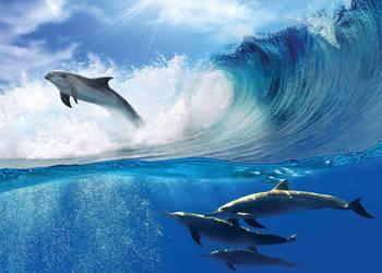 Tapeta, fotototapeta Delfin, delfiny i fale