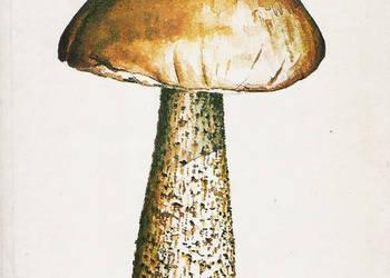 grzyby leśne - A. Grzywacz