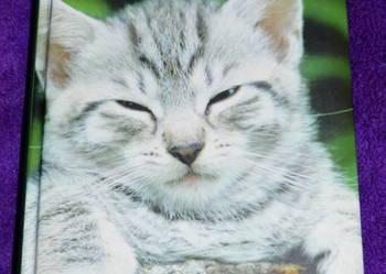 Koty. Rasy pielęgnacja życie z kotem poradnik