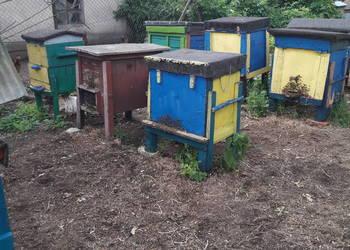 Ule z pszczołami W-skie Poszerzane