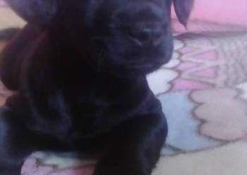 Sunia Labrador
